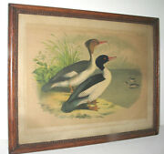 Antique Victorian Hunting Ducks Chromolithograph Print In Lovely Wooden Frame
