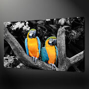 Parrots Blue Gold Macaws Canvas Print Picture Wall Art Home Decor Free Delivery