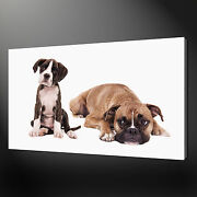 Boxer Dogs Canvas Print Picture Wall Art Home Decor Free Fast Delivery