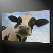 Cow Gaze Canvas Print Picture Wall Art Home Decor Free Fast Delivery