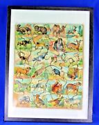Antique Wood Litho Paper Animal Abc Puzzle Circa 1890and039s