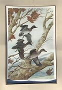 John A Ruthven For Ducks Unlimited Original Signed Print. Green Winged Teal 1989