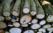 Hickory Wood Logs For Bbq/grilling/wood Smoking Arts And Crafts15lbs-19lbs