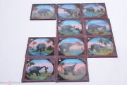 ✅ 10 Pictures Glass Magic Lantern Andlsquoelephant Fights Racistandrsquo Projector Slides 6