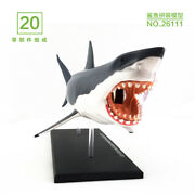 Puzzle Toys Shark Anatomy Science And Education Assembled Model Teaching Model