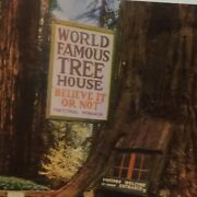 World Famous Tree House Believe It Or Not Laytonville Unposted Postcard