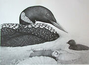 D. D. Tyler Wild Common Loon And Chick 15 X 18 Maine Art Poster 1984