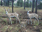 Gorgeous Looking Deer Aluminum Statues In Natural Color Buck, Doe And Baby Doe