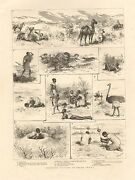 1885-antique Print-springbok Hunting In South Africa