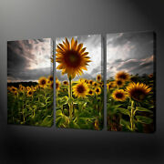 Sunflowers Canvas Wall Art Pictures Prints Free Uk Pandp Size Variety