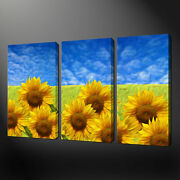Sunflower Field Canvas Wall Art Pictures Prints Free Uk Pandp Size Variety