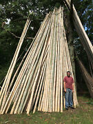 Large Bamboo Poles 3-4diameter X 20and039 Long Wholesale Clearance Sale Several Lots