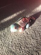 Beanie Babies Iggy The Iguana With Tongue And Tag On Spine Incredibly Raremint