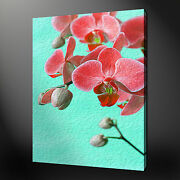 Orchid Canvas Wall Art Pictures Prints Painting Style Free Uk Pandp