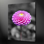 Dahlia Purple Floral Canvas Wall Art Pictures Print Variety Of Sizes Free Uk Pandp