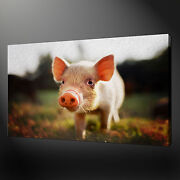 Cute Piglet Canvas Wall Art Pictures Prints Variety Of Sizes Free Uk Pandp