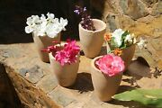 19th Century Antique Set Of 5 French Stoneware Planters