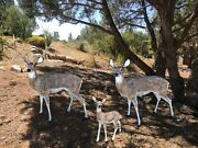 Family Of Deer Aluminum Statues Natural Color Buck Doe And Standing Baby Doe