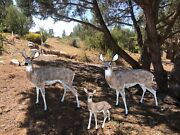 Family Of Deer Aluminum Statues Natural Color Buck, Doe And Grazing Baby Doe