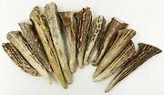 12pack - Deer Antler Gnarly Brow Tine Tips Points Pendants Grade A