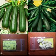 Courgette - Zucchini And039and039black Star F1and039and039 Hybrid 10 Top Quality Seeds - Extra Rare