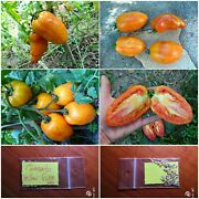 Rare Heirloom Tomato And039and039yellow Fireand039and039 60 Top Quality Seeds - Mega Rare Special