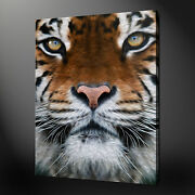 Bengal Tiger Canvas Wall Art Pictures Print Picture Free Uk Pandp Variety Of Sizes