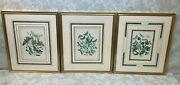 3 Antique Butterfly/moth/caterpillar Prints Framed And Matted Plates 19, 31 And 32