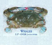 12 [frozen] Maryland Soft Shell Crabs Whales Measures 5 1/2 Inches And Up