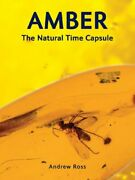 Amber The Natural Time Capsule By Ross Andrew Hardcover