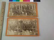 2 Silver Springs Florida Spearing Fish Fishing Op Havens Stereoview Photo Cdii