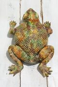19th Century Antique Life-size Majolica Palissy Toad Figure Portuguese
