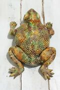 19th Century Antique Life-size Majolica Palissy Toad Figure, Portuguese