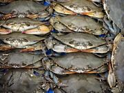12 [frozen] Maryland Soft Shell Crabs Jumbos Measures 5 To 5.5 Inches Approx