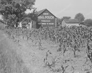 Barn Sign Chew Mail Pouch Tobacco1938  8 - 10 Bandw Photo Reprint