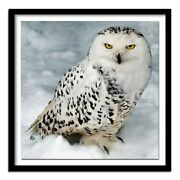Full Square/round Drill 5d Diy Diamond Painting Snow Owl 3d Embroidery Cross