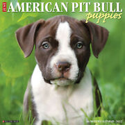 Willow Creek Just American Pit Bull Terrier Puppies 2022 Wall Calendar Dog W