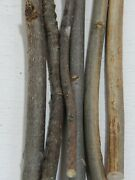 130 Ash Sticks Branch Crafts Woodworking Wood Carving Wands 3/161d 410l