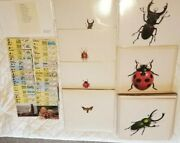 During Print Dynastes Scarab 33 Insects Beetles 13 Water Birds 13 Laminated Card