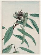 4960.exotic Plant.seeds Wrapped By Plant.leaves.poster.decor Home Office Art