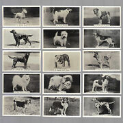 Cigarette Cards. Sinclair Tobacco. Champion Dogs 1st.1938.complete Set Of 54