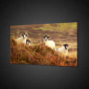 Black Face Sheep Canvas Picture Print Wall Art Home Decor