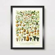 Antique Fruit Wall Chart Art Print Traditional Style Kitchen Decor Wall 10 Sizes