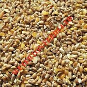 20kg Best Mixed Poultry Corn Feed-food For Hens And Ducks Gm Free - Next Day Del