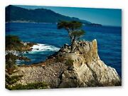 Lone Isolated Cypress Tree Sea Ocean Rock Canvas Wall Art Picture Print
