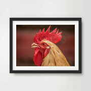 Chicken Animal Wildlife Photography Art Print Poster Ranch Decor 10 Size Picture