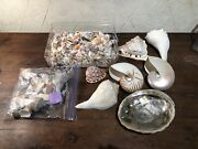 One Lot Of Large And Small Sea Shells Nautilus Conch Abalone Great Quality