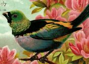 Lot Of 3 1880's Religious Victorian Cards Bible Quotes Colorful Wild Birds P188