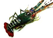 Bamboo Lobster Shrimp Hand Made Wood Art For Wall Decorations Feng Shui Gift For