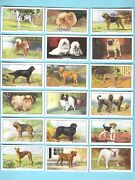 Cigarette Cards. Gallaher Tobacco. Dogs 2nd Series. Complete Set Of 48. 1938
